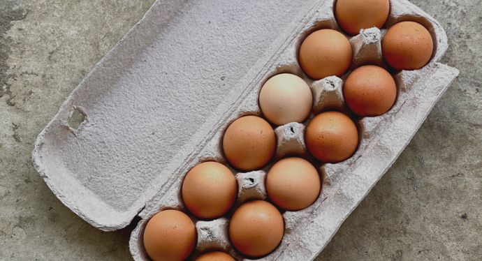Know Your Egg Farmers: The Real Difference of Homestead Eggs