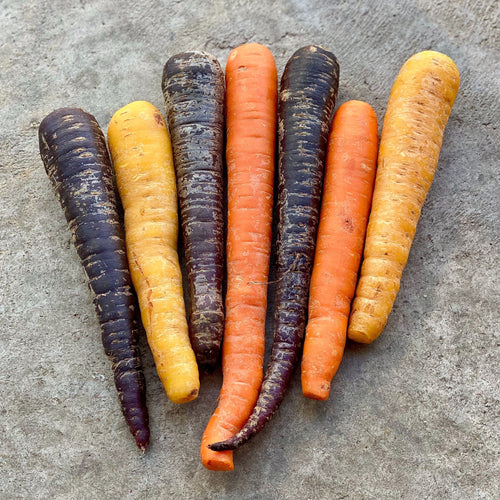 Rainbow Carrots (Hillside Gardens)