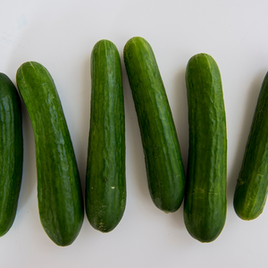 Mini Cucumber (Great Lakes Greenhouses)