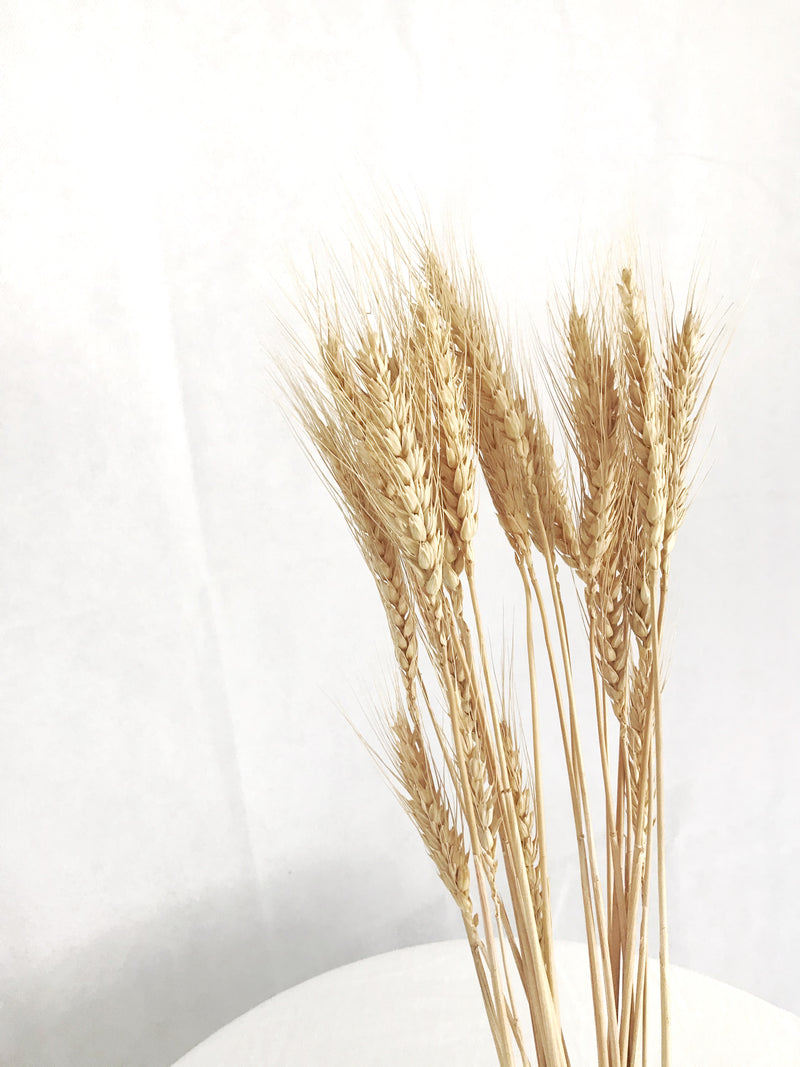 Australian Dried Wheat Golden - Large
