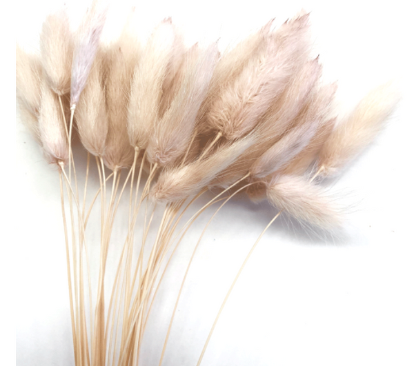 Dried Rabbit Tail - Champagne Pink