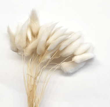 Dried Rabbit Tail - White