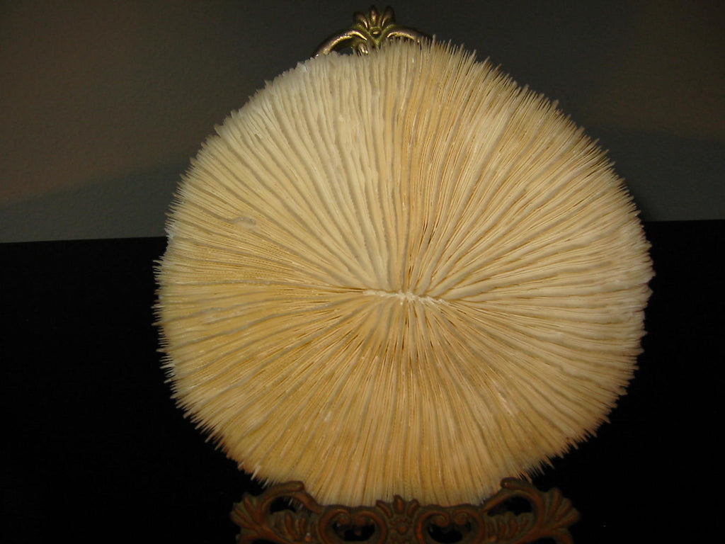Oceanic White Natural Sea Coral Decorative Dried Sponge - Designer Unique Finds
