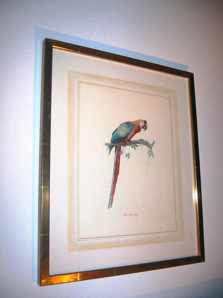 Ara Aracanga Cuban Bird Lithograph Botanical Art - Designer Unique Finds   - 3