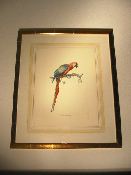 Ara Aracanga Cuban Bird Lithograph Botanical Art - Designer Unique Finds   - 4