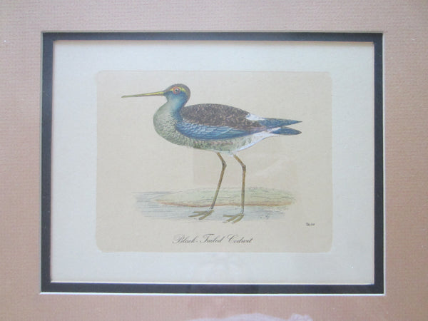 Birds Lithographs Hand Colored Black Tailed Codwit  Kentish Dottrel - Designer Unique Finds