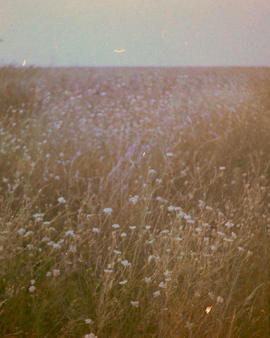 35mm picture of a flower field shot with an Olympus Pen EES-2