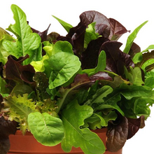 Load image into Gallery viewer, Lettuce, Kale
