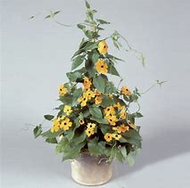 Black-Eyed Susan Vine Basket
