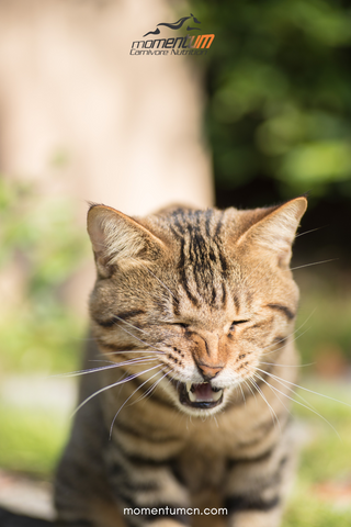 Allergies In Pets | Common Allergy Causes and Natural Remedies | Momentum Carnivore