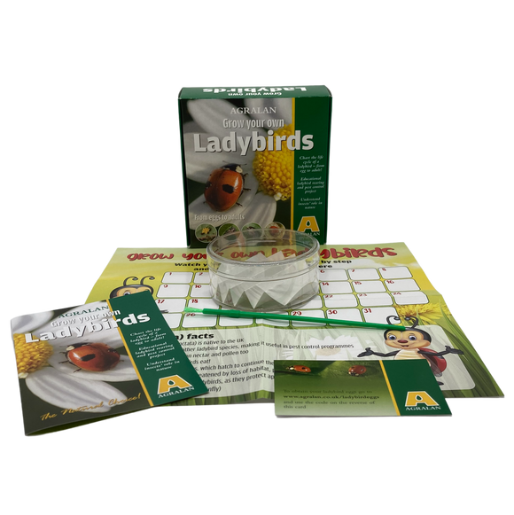 Grow Your Own Ladybirds