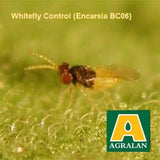 Agralan 'Greenhouse Whitefly Control'