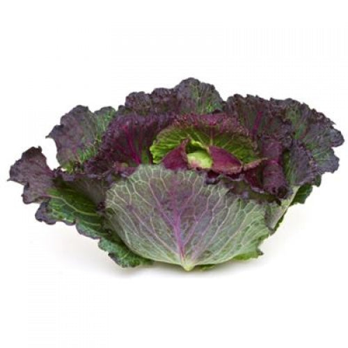 Cabbage - January King