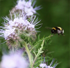Dingley Dell Million Bee Project