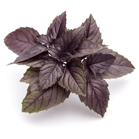 Red Leaf Basil 30g