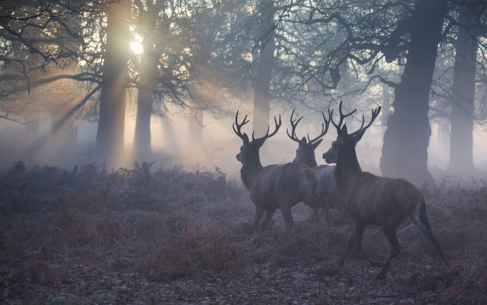 Stags in Richmond Park