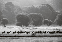 Load image into Gallery viewer, Deer Herd and Cyclist at Dawn, Richmond Park