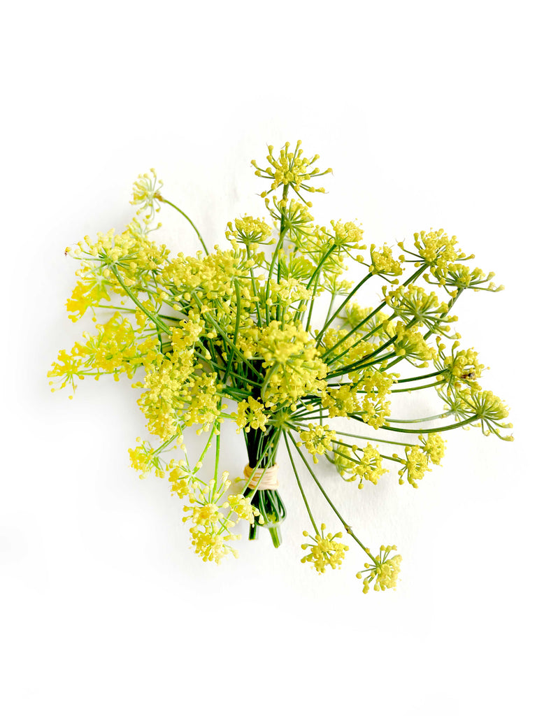 Fennel Flowers with pollen - The Falls Farm