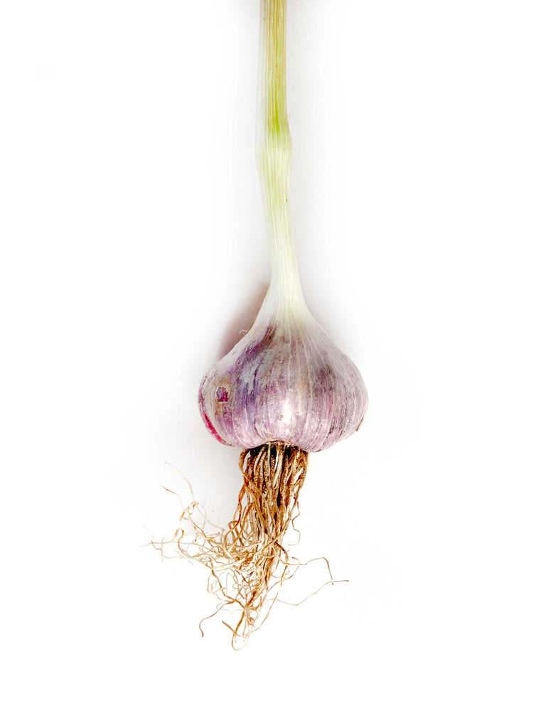 Purple Italian Garlic - The Falls Farm