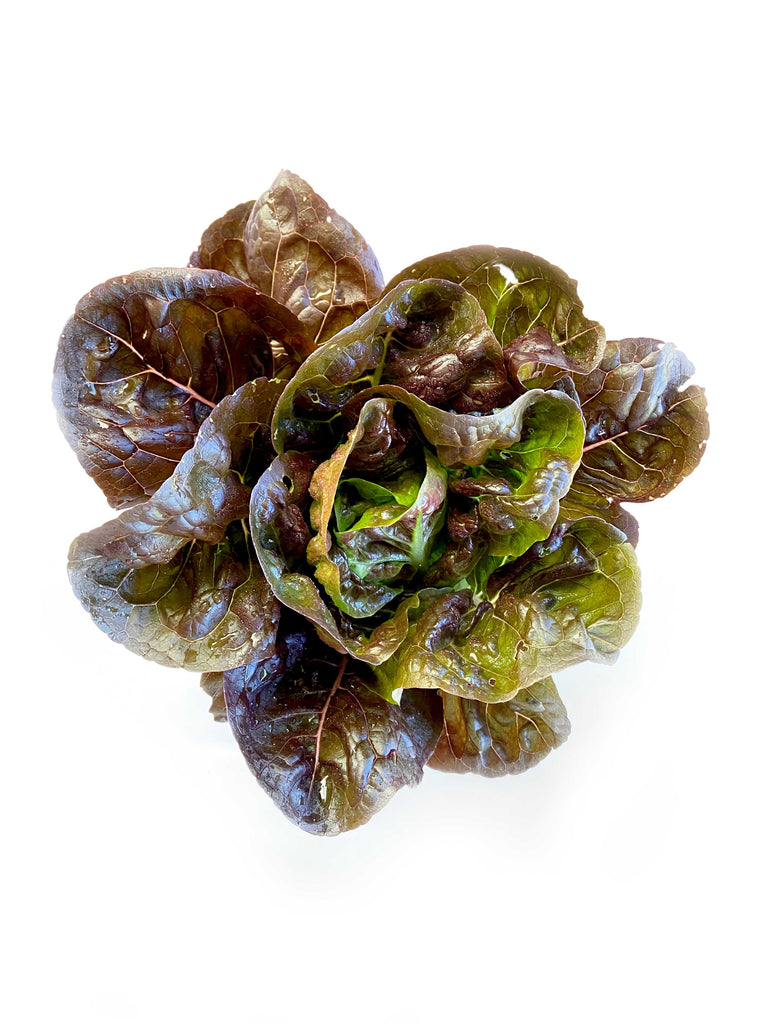Red Baby Cos Lettuce - The Falls Farm