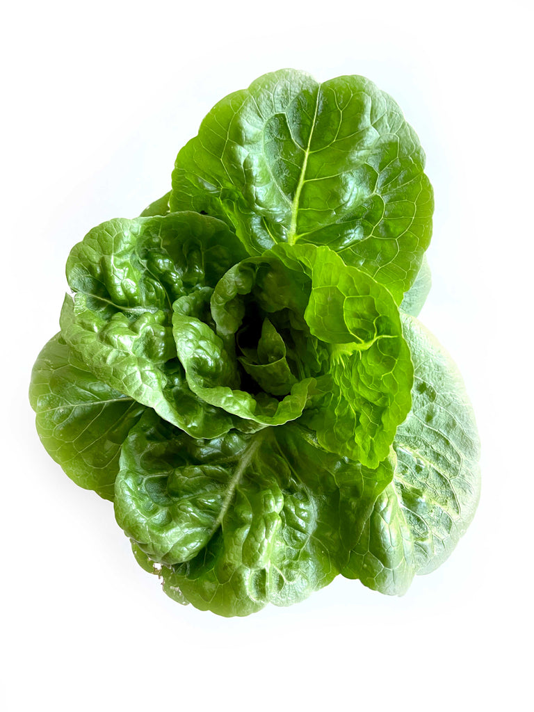 Baby Cos Lettuce - The Falls Farm