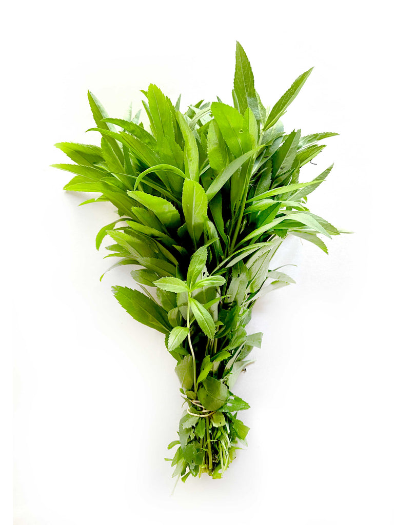 Mexican Tarragon - The Falls Farm