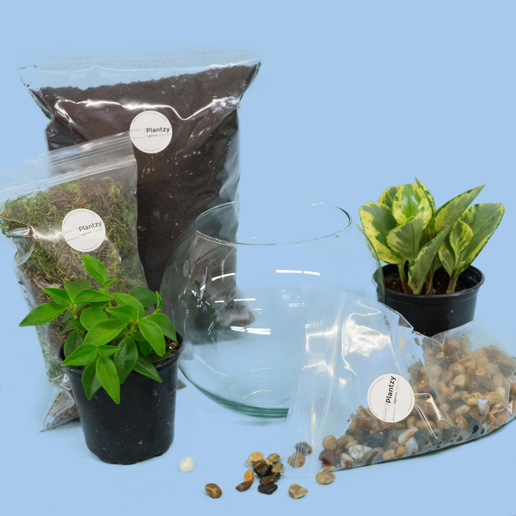 TERRARIUM DIY KIT - TROPICAL