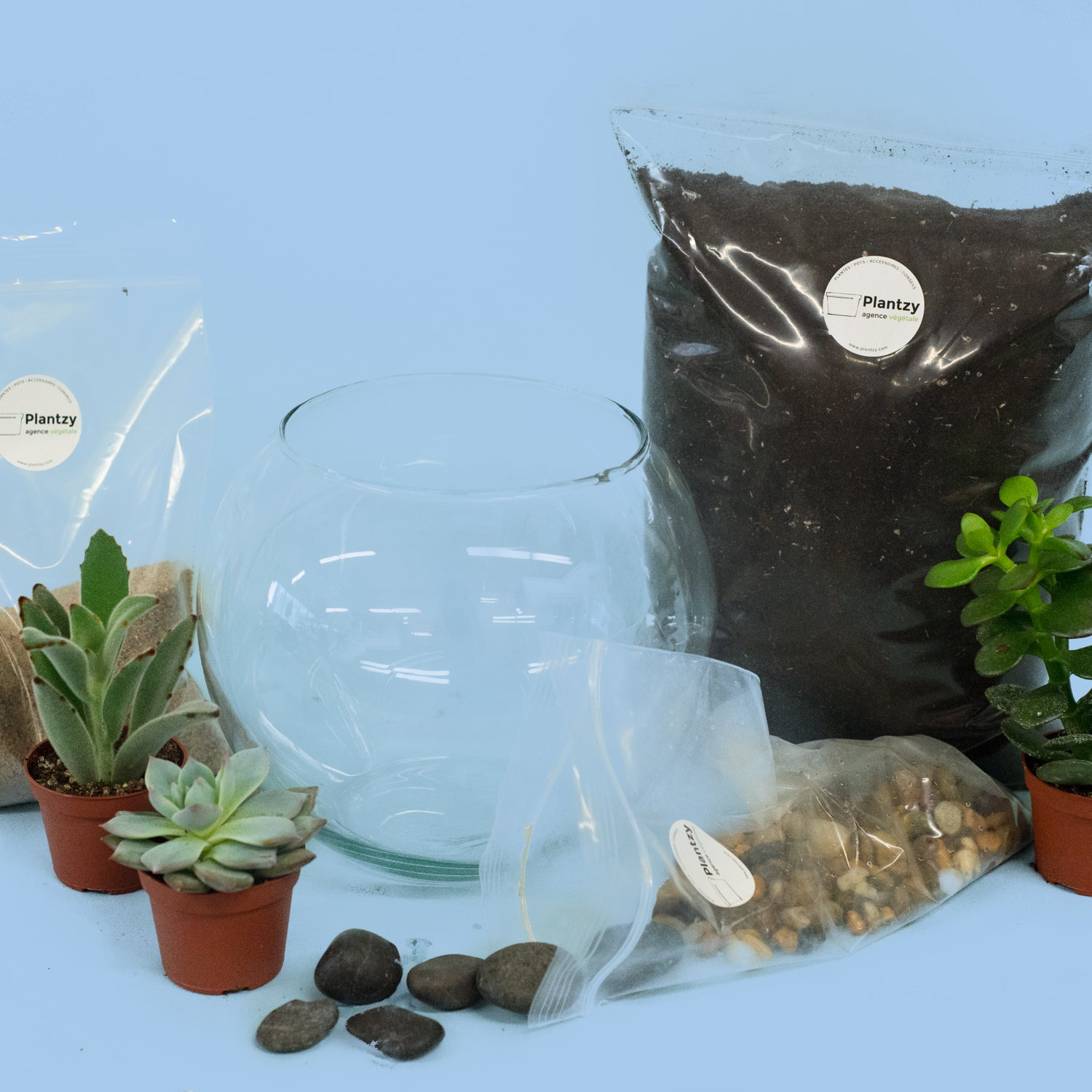 TERRARIUM DIY KIT - DESERT