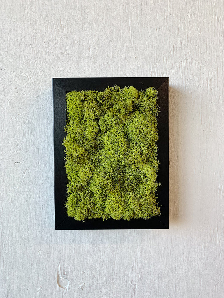 BLACK FRAME AND MOSS