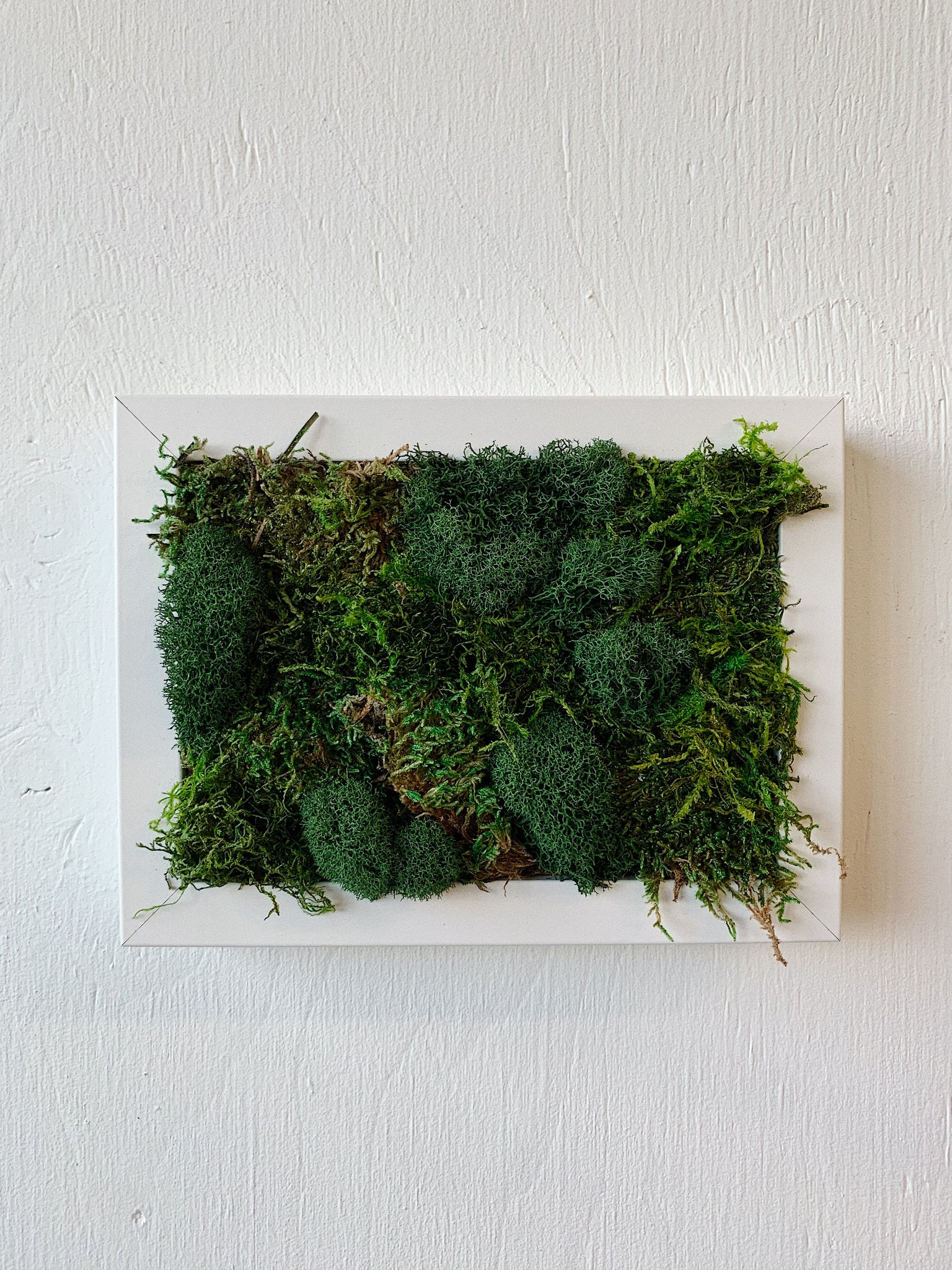 FRAME AND MIXED MOSS