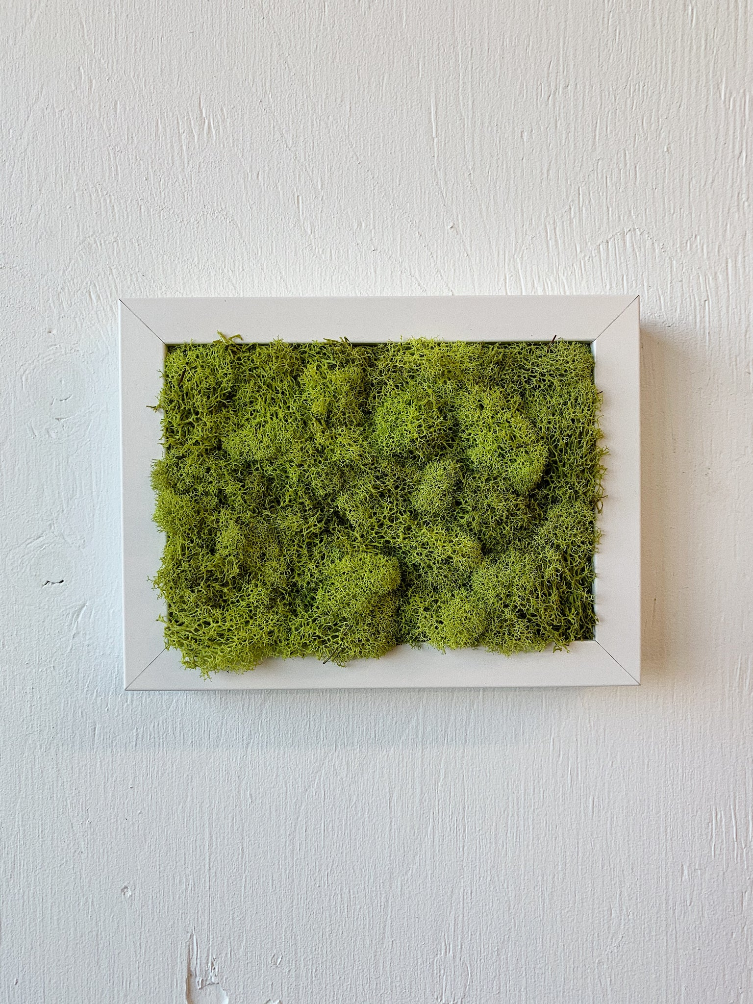 WHITE FRAME AND MOSS