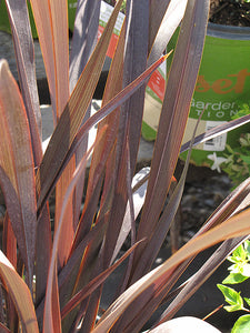 Black Adder™ New Zealand Flax foliage