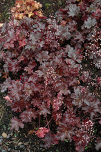 Load image into Gallery viewer, Black Taffeta Coral Bells