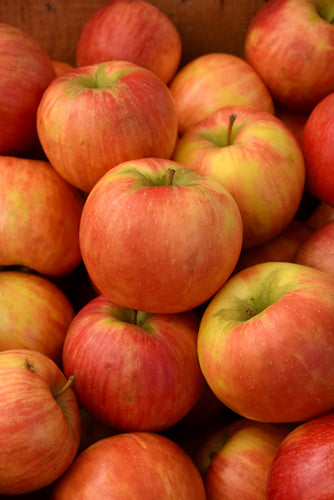 Honeycrisp Apple fruit