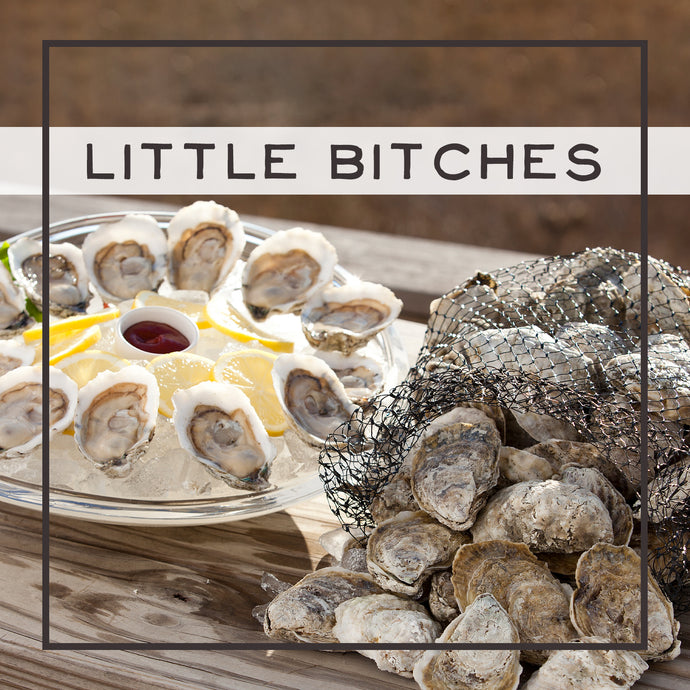 little bitches, oyster, oysters, fresh oyster, virginia oyster, oysters delivered