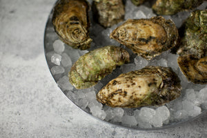 Chincoteague Salts: The Saltwater Cowboy's Oyster