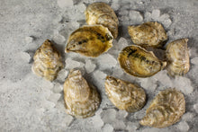 Load image into Gallery viewer, little bitches, oyster, oysters, fresh oyster, virginia oyster, oysters delivered