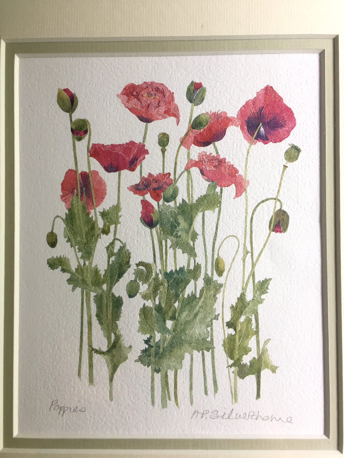 Authentic PENNY SILVERTHORNE Signed Matted & Frame 'POPPIES' Watercolor Art Print