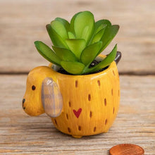 Load image into Gallery viewer, Critter Succulent