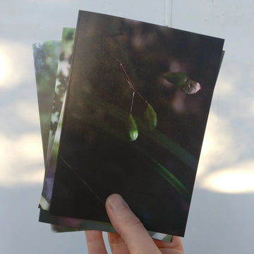 Greeting Cards- Help us fund native tree plantings