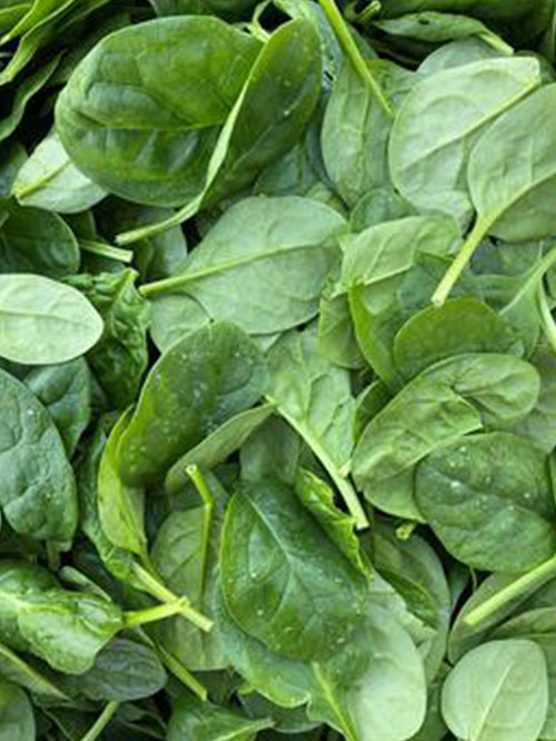 Baby Spinach | 150grams