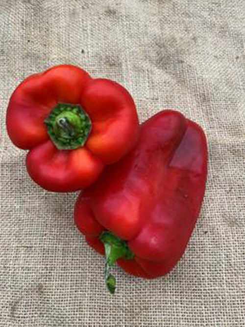 Red Capsicum | 1 Each