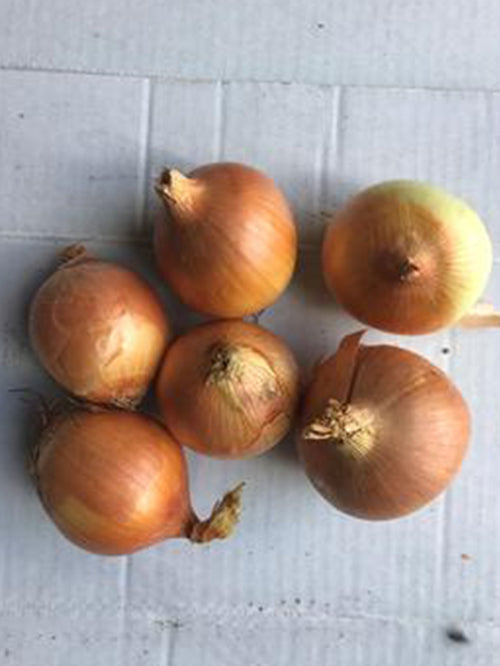 Onions (Brown) | 1kg