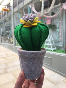 Felt Cactus - fun, funky and cute everlasting plants!