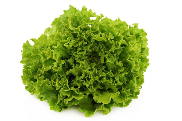Lettuce Green Coral Each