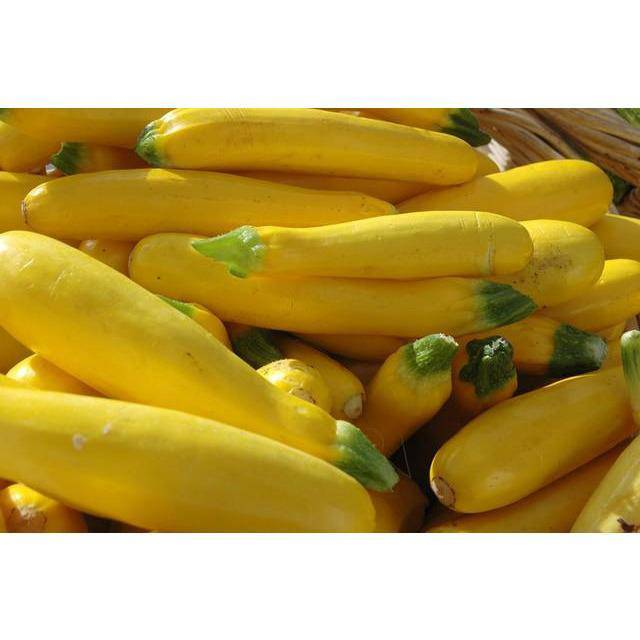 Squash Yellow-2lbs - Pepper Pantry
