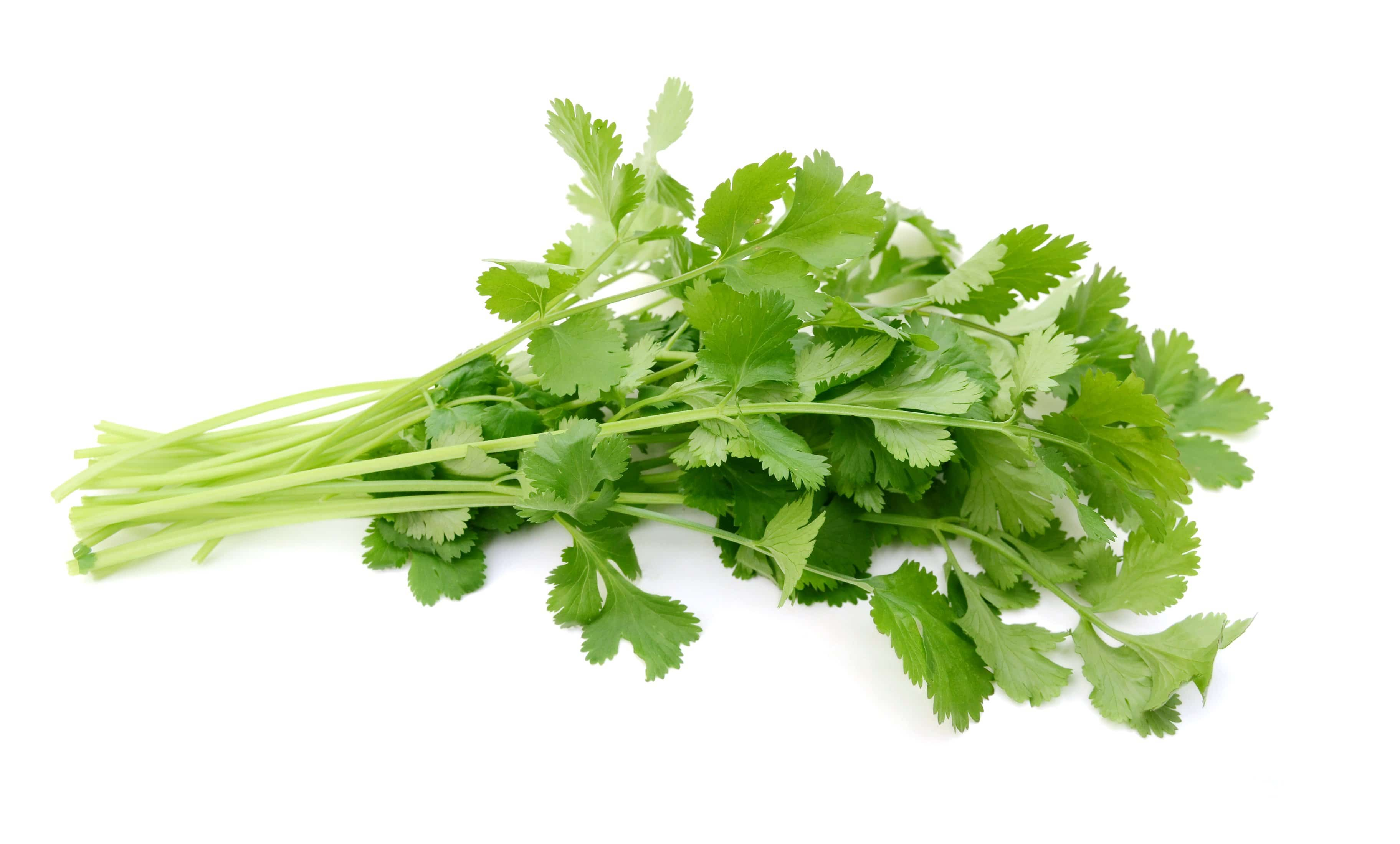 Cilantro - 1 Bunch - Pepper Pantry