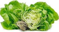 Hydro Boston Lettuce - Pepper Pantry