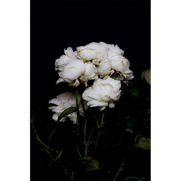 Just South West - A3 White Rose Bouquet