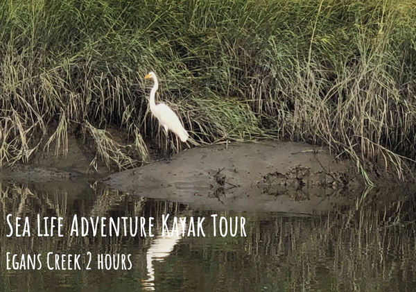 Gift Cards & Tours | Amelia Island Adventures
